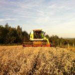 Getreideernte im Ösling